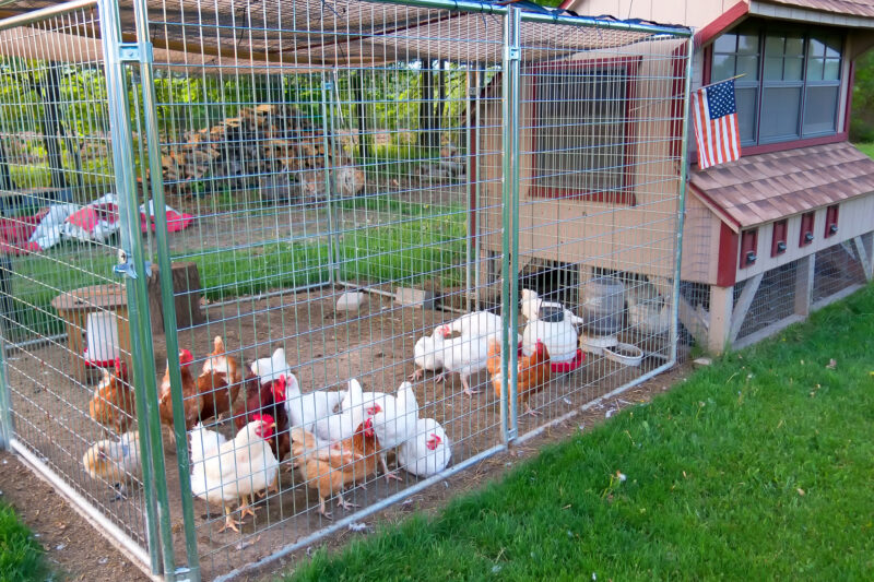 Tips on Building a Chicken House